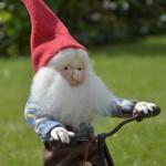 Strømpenisse på hjul